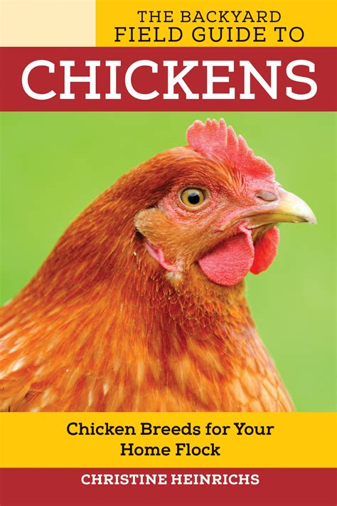 backyard chickens book the backyard field guide to chickens christine heinrichs