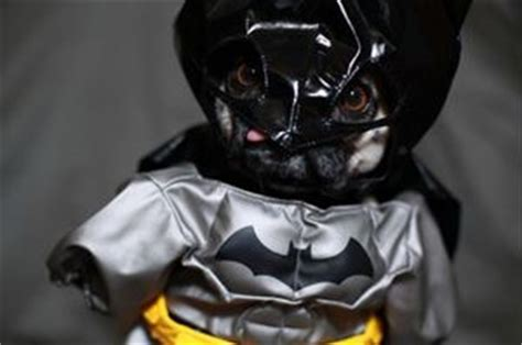 pug says batman pictures of animals pictures