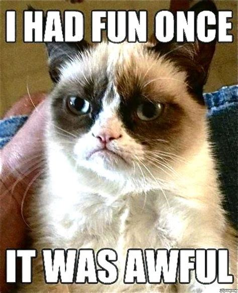 Cat Internet Meme - the nine million lives of internet cats western