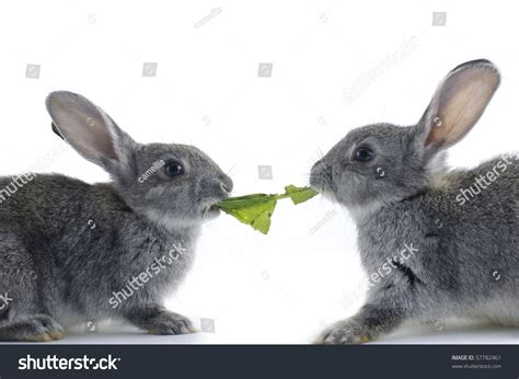 vegetables a rabbit can eat two rabbit eat vegetable leaf stock photo 57782461
