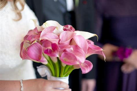 Wedding Bouquet Calla Lilies by Want To Use Mini Calla Lilies In Wedding Bouquets We