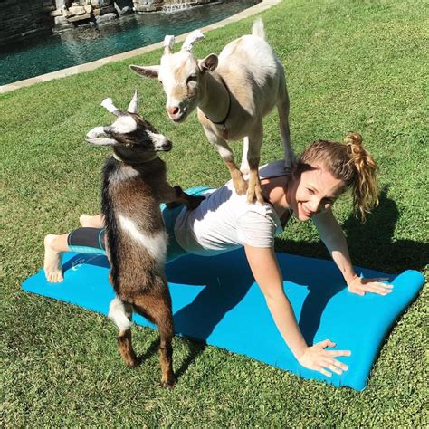 get your goat rentals party goats la goat yoga in los angeles goats for