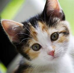 calico cat names 120 great ideas for naming your calico