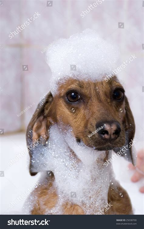 puppy suds the in soap suds stock photo 25038700