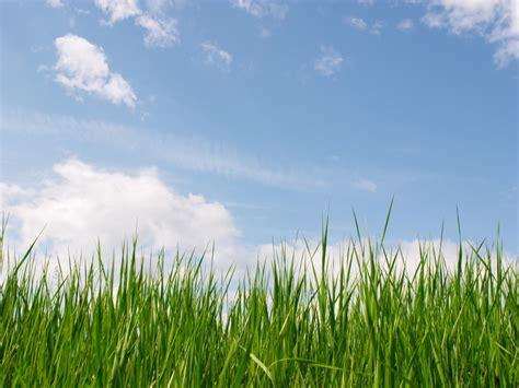 grass powerpoint template grass and sky wallpaper wallpapersafari