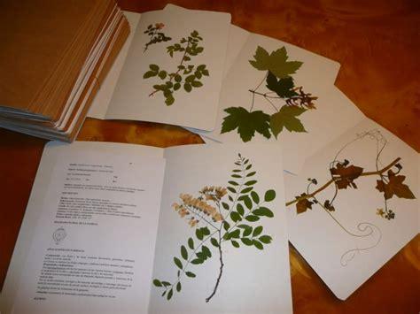 libro el herbario de las proyecto herbario biologiainstitutolasalle