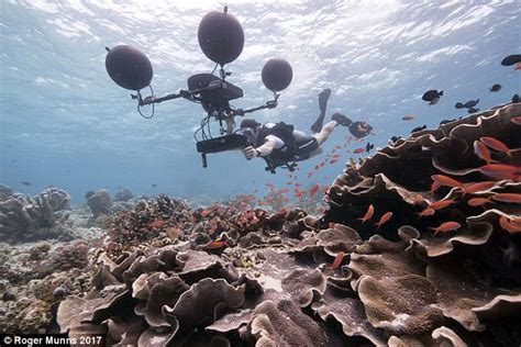 into the blue underwater sounds of nature for relaxation bbc s blue planet ii defends underwater sound effects