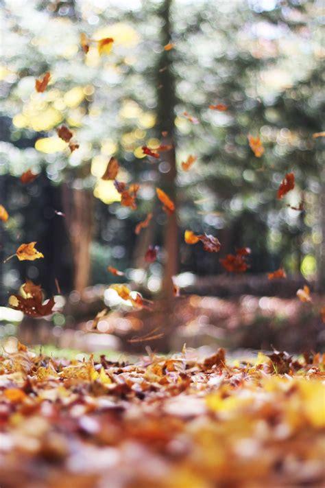 swirling autumn leaves photo  autumn mott rodeheaver