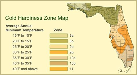 gardening zones florida cold hardiness in florida gardening ideas