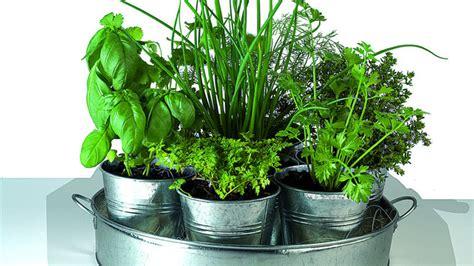 comment cultiver des plantes aromatiques dans int 233 rieur