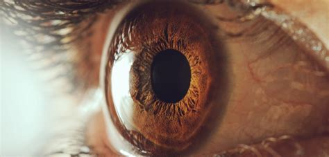 Ls For Macular Degeneration by Als Affects Visual Pathways Study Into Macular