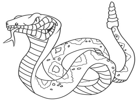free coloring page snake snake coloring pages 16 coloring kids
