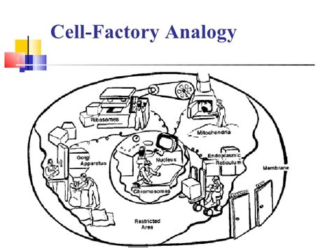 hho generator wiring diagram car diagram wiring diagram