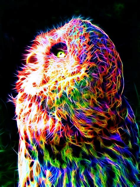 Colorfull Owl colorful owl by megaossa on deviantart