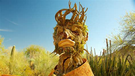 scottsdale az botanical gardens desert botanical garden in arizona expedia