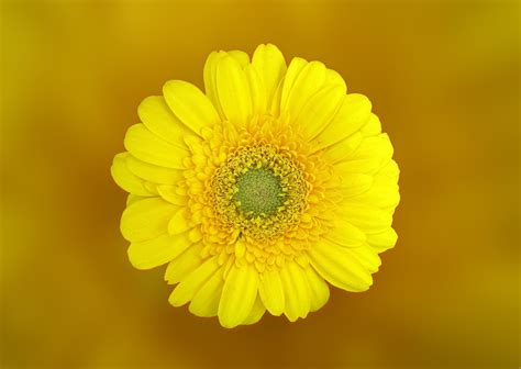 images of yellow in macro 183 free stock photo