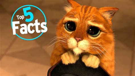 Kuas Cat 3in top 5 paw sitive facts about cats