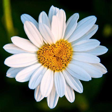 fiore flowers grecia storia di emilia ferraraitalia it quotidiano