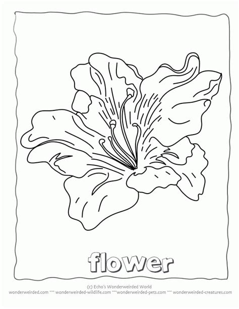 types of flowers coloring pages the the witch and the wardrobe coloring pages az
