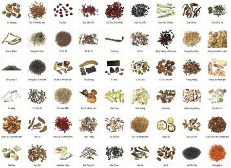 medicinal herb chart herbalism medicine medicinal herbs chart medicinal herbs natural health