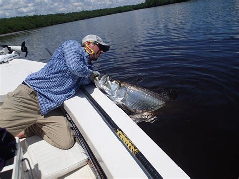 large boat fishing charters near me july august everglades fishing report spirit of the fly