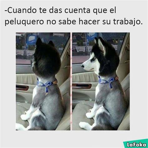 imagenes de whatsapp graciosas de animales 30 im 225 genes graciosas de animales perros y gatos