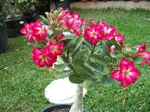 Plantas De Exterior Sin Flor