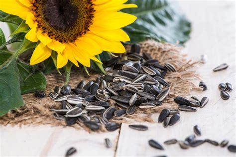 watchfit health benefits of sunflower seeds