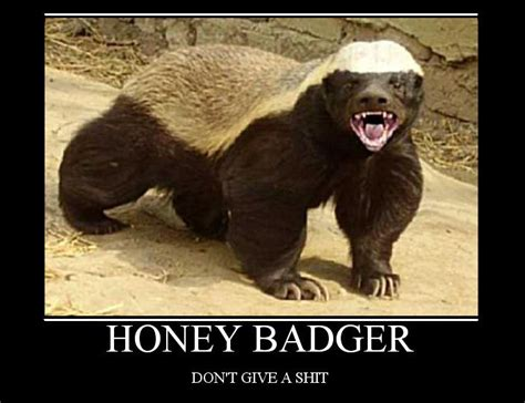 Badger Memes - honey badger tv show