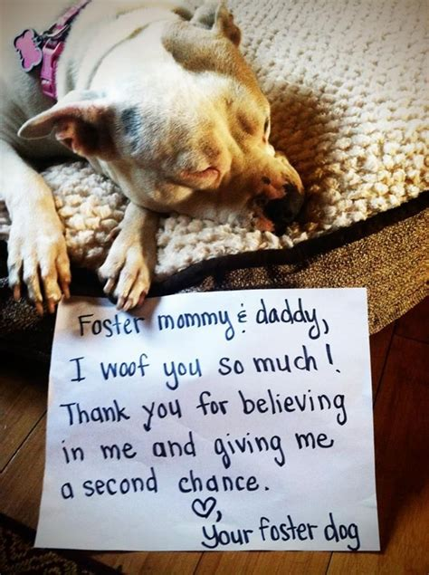 fostering dogs a letter from your foster a pitty bull stole my