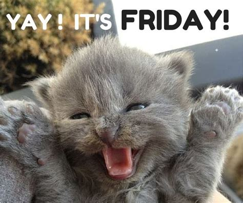Funny Friday Memes Tumblr - yay it s friday pictures photos and images for facebook
