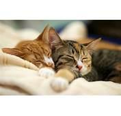 �萌的猫咪图片 第2张 尺寸1920x1200 天堂图片�