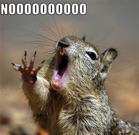 Dramatic Squirrel Meme - world wildness web noooo