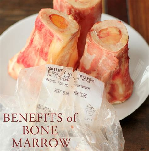 marrow bones for puppies mind health