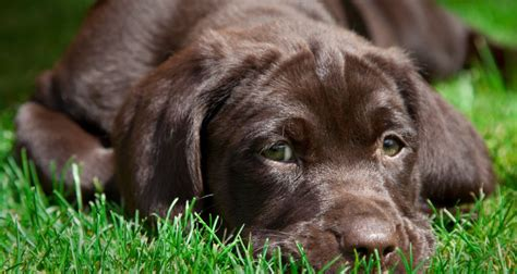 when should you start a puppy how do you stop dogs from chewing on wood sick vomiting and diarrhea when should