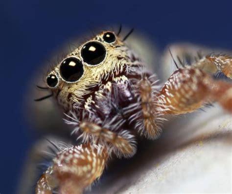 imágenes de animales insectívoros ojos enormes de animales insectos y ar 225 cnidos taringa
