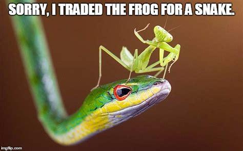 Mantis Meme - mantis trade imgflip