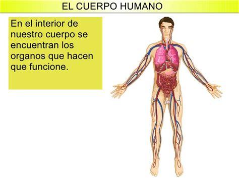 imagenes reales de organos del cuerpo humano el cuerpo humano