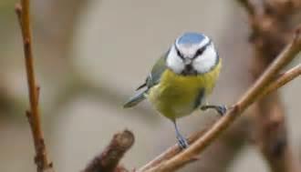 les oiseaux de nos jardins et de nos cagnes
