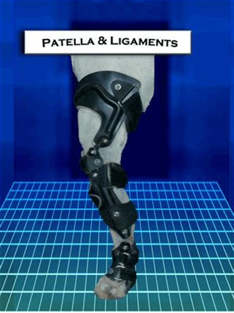 luxating patella brace prosthetic device braces and for dogs on