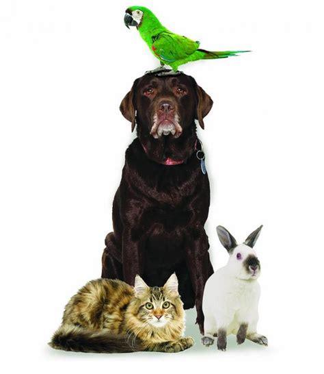 comfort animal united delta tightening rules for comfort animals st