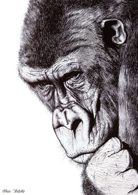 Pencil Drawing Of Zoo Animals