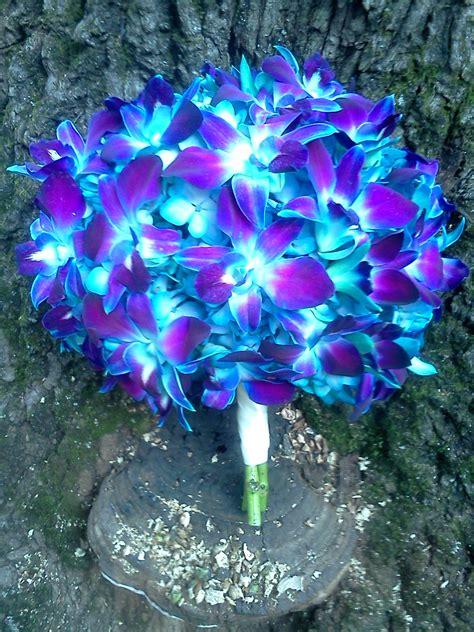 nh fiori blue orchid bouquet www lyndseyloringdesign nh me