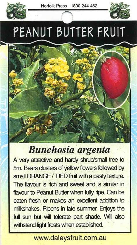 peanut butter fruit tree bunchosia argenta buy peanut butter