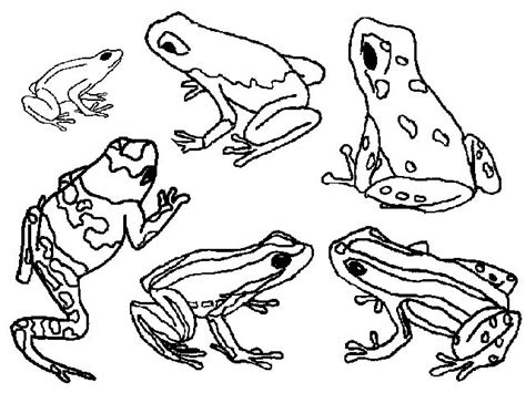 glass frog coloring page 17 best images about a mystery frog on pinterest frog