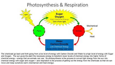 cell energy photosynthesis and respiration section 6 1 photosynthesis respiration vista heights 8th grade science