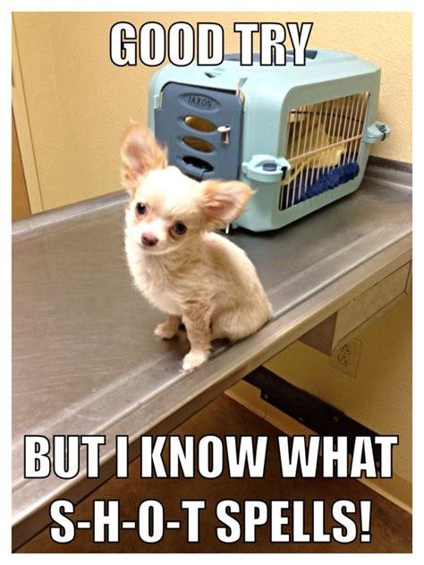 Funny Chihuahua Memes - meme 171 my chihuahuas blog