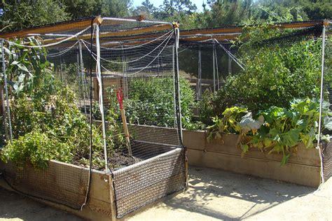 Desert Vegetable Gardening Vegetable Garden Layout Landscape Design In The Desert