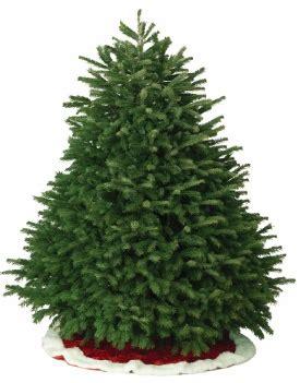 maurice mandry christmas trees