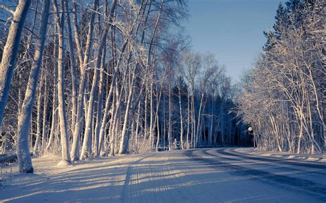 National Geographic Wall Murals image gallery winter forest
